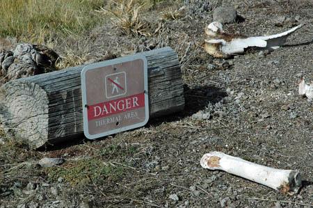 Dangersignbones on Animal Life Cycle